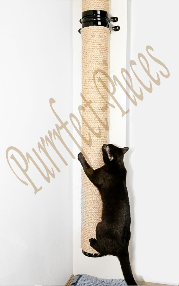 wall mountable cat scratching climbing post