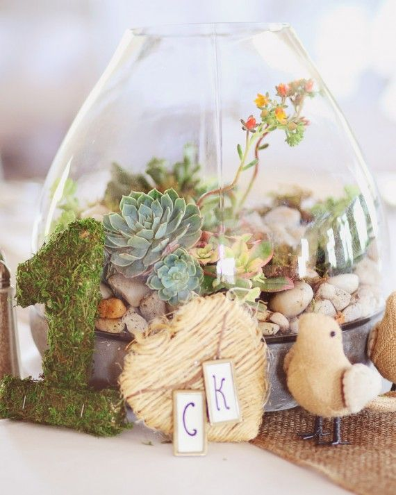 These terrarium centerpieces featuring plants like moss and succulents were surrounded by bird figurines and other things.