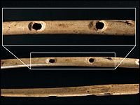 "A Little Flute Music To Warm The Cave: ""Archaeologists say they have unearthed the world's oldest musical instruments. They are flutes, made of vulture bone and mammoth tusks. They were found in caves in southwestern Germany and date back to the time when modern human beings — who actually looked like us — were first venturing into Europe."""