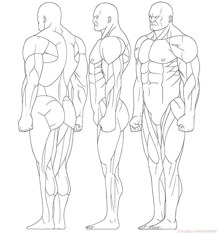 48 best Skeleton & Muscles images on Pinterest | The human body ...