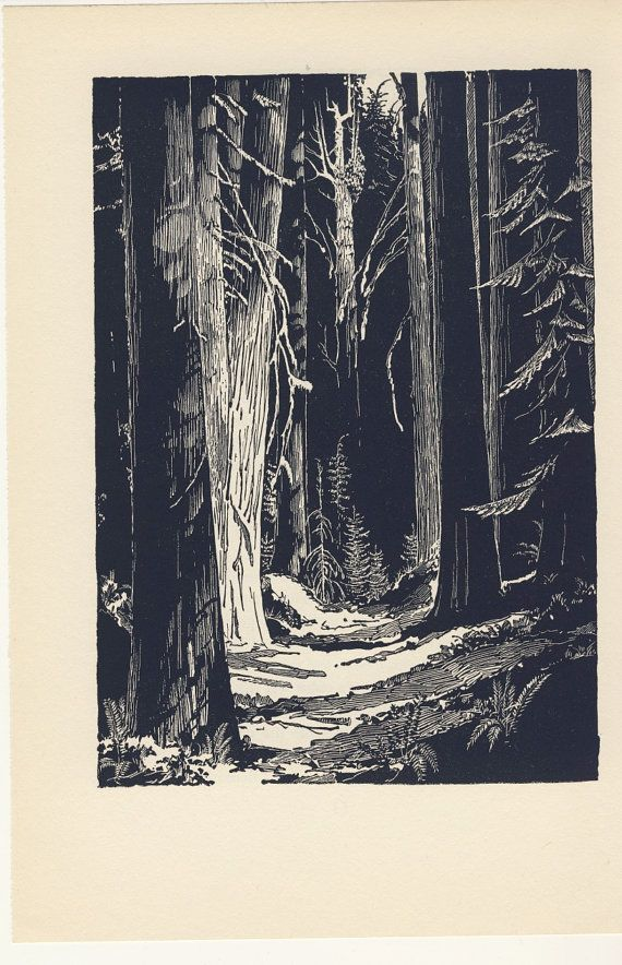 Vintage 1951 Western Cedars Pen and Ink Illustration