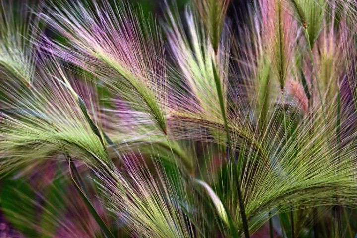 #relaxwithsussan watch some beautiful grass grow