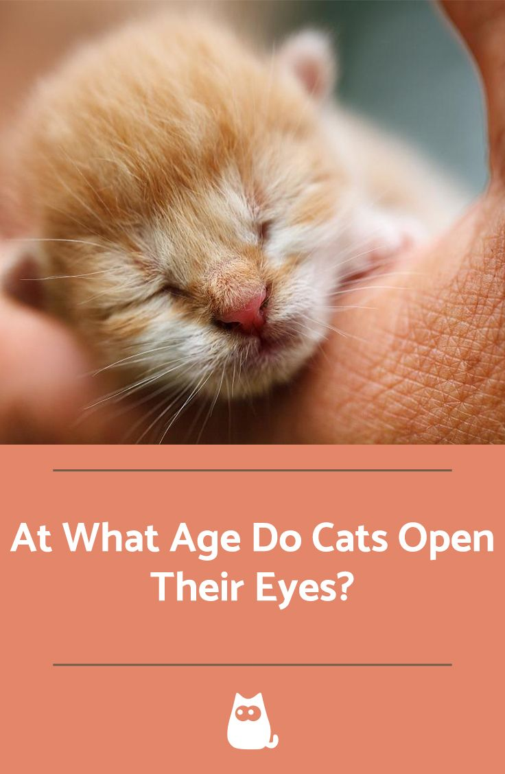 At What Age Do Cats Open Their Eyes Baby Animals Funny Baby
