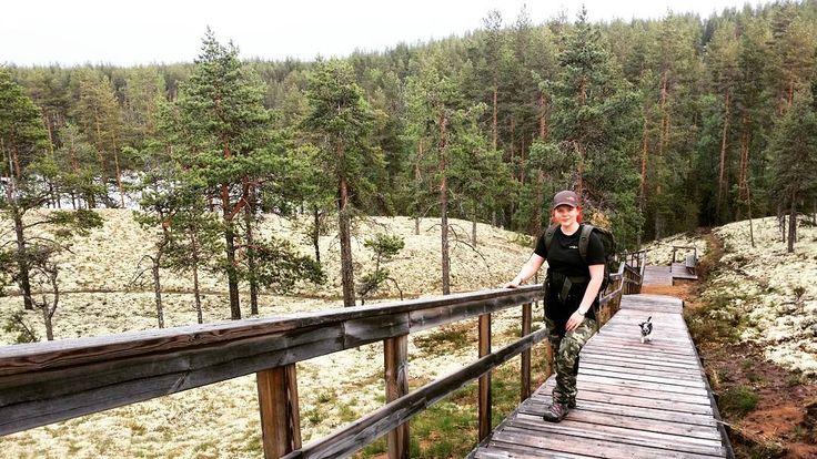 """61 tykkäystä, 1 kommenttia - Kati (@katibirgitta) Instagramissa: """"Rokualla  #rokua #rokuankansallispuisto #vaellus #kesä #hiking #nature #finland #landscape"""""""