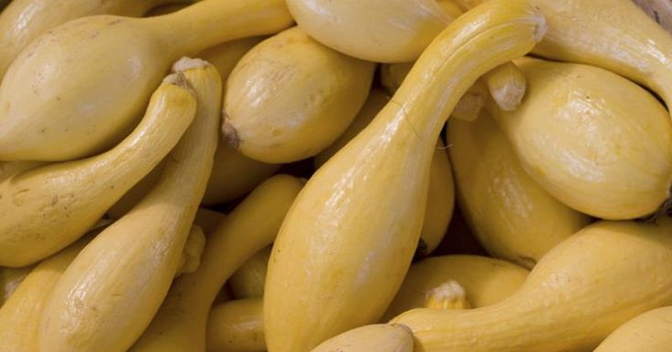 Yellow crookneck squash peaks during the summer months, but you can enjoy the freshness of the vegetable throughout the entire year by freezing it.