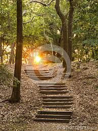 Google Image Result for http://thumbs.dreamstime.com/x/stairs-forest-going-up-hillside-toward-sunset-33269352.jpg
