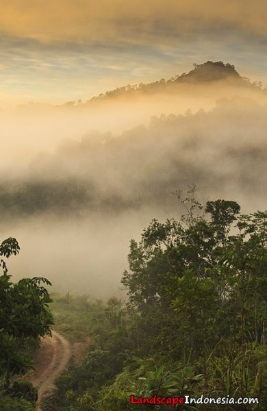 morning misty, Borneo, Indonesia
