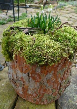 Bepflanzter Baumstamm