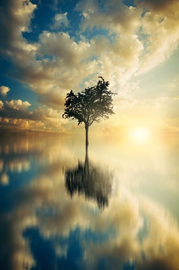 ~~Tree on water reflection with blue golden sky | by Stijn Dijkstra~~
