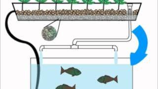 Home Aquaponics- Quick Animation, via YouTube.