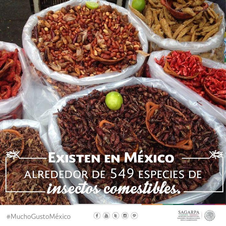 SAGARPA México @SAGARPA_mx   Los chapulines, escamoles, gusanos de maguey, jumiles y hormigas son algunos insectos comestibles en #México.