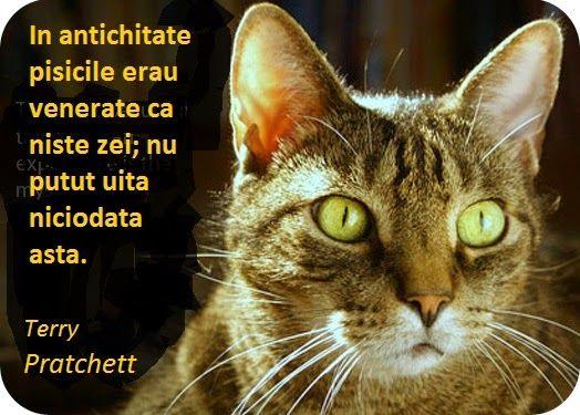 Blogul Dianei: Pisica, simbol si semnificatie