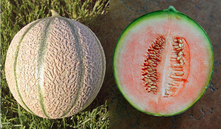 Italienische Zuckermelone / Melone - 15 Samen