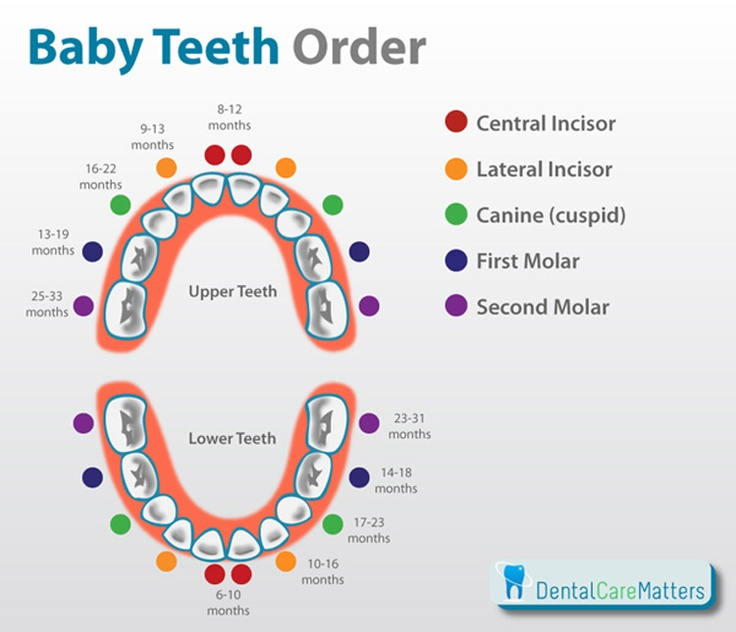 The order that baby teeth erupt- a handy chart for parents