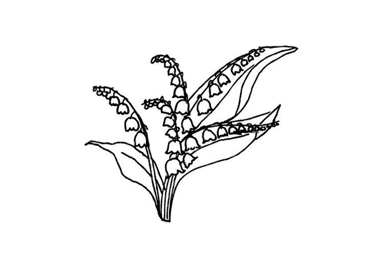 malvorlage maiglöckchen  malvorlagen maiglöckchen vorlagen