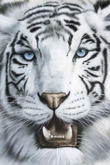 Tiger Blanco | Animals | Hardboards | Wall Decor | Plaquemount | Blockmount | Art | Pictures Frames and More | Winnipeg | MB | Canada