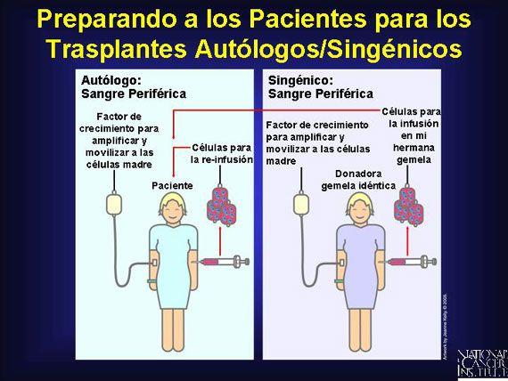 Como los donadores alogénicos, los pacientes que donan su propia sangre periférica para un trasplante autólogo de células madre (troncales), así como los gemelos idénticos realizando una donación singénica, reciben inyecciones de factor de crecimiento antes de recolectar por aféresis. Esto amplifica el número de células madre de la sangre en el torrente sanguíneo. Casi todos los trasplantes autólogos/singénicos ahora son tomados de sangre periférica.