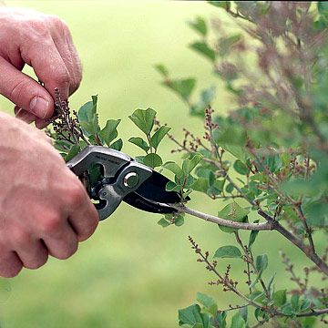 25 Gardening Tips Every Gardener Should Know. Pin now read later.