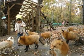 Image result for 宮城蔵王キツネ村