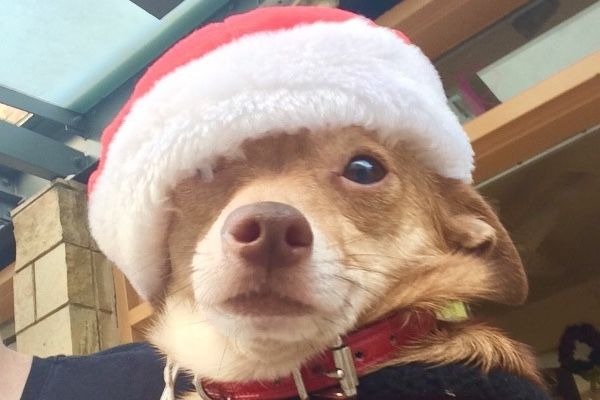 As the Holidays are quickly approaching, Street Tails Animal Rescue (STAR) is gearing up to plan for the New Year!  What better way to plan ahead, than to have a vision set in place for saving lives?!  We are shooting for the sky, and asking for each and every one of our friends, families and sup...
