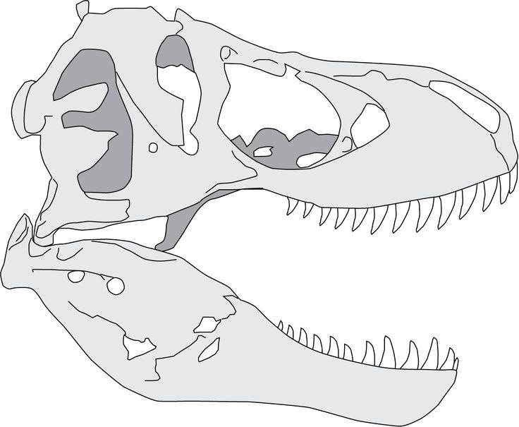 Dessin du cr ne de t rex sur la base de stan bhi 3033 - Dessin dinosaure t rex ...