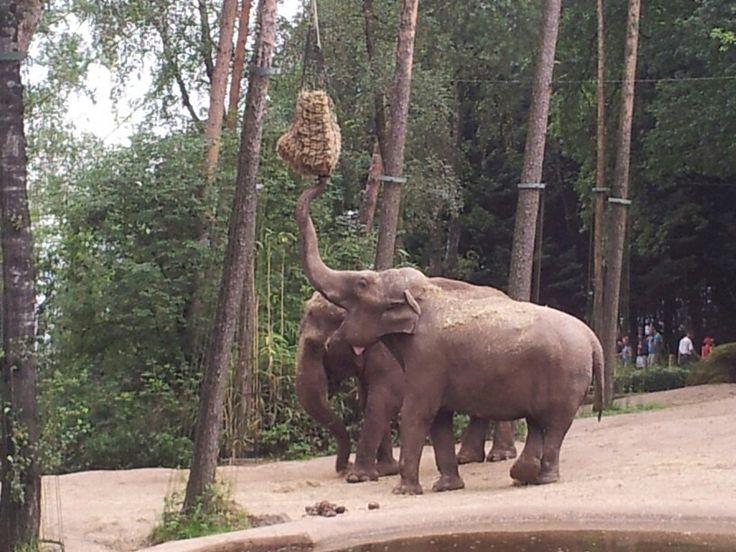 Burger's Zoo Arnhem ©Bea Geerts 2014