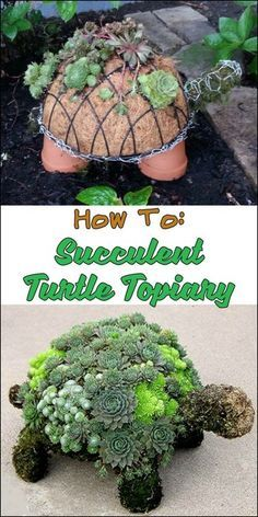 Decorate Your Garden with This Adorable DIY Succulent Turtle Topiary!