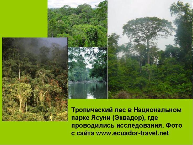 виды лесов: 25 тыс изображений найдено в Яндекс.Картинках