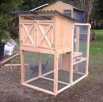 Chicken coops and chickens