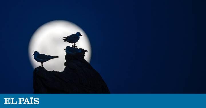 Este 31 de enero se dió un fenómeno que no se repetía desde hace 150 años; un eclipse lunar, una superluna, una luna de sangre y una luna azul