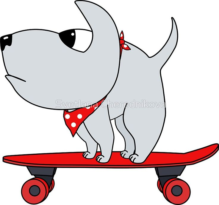 Dog on the board