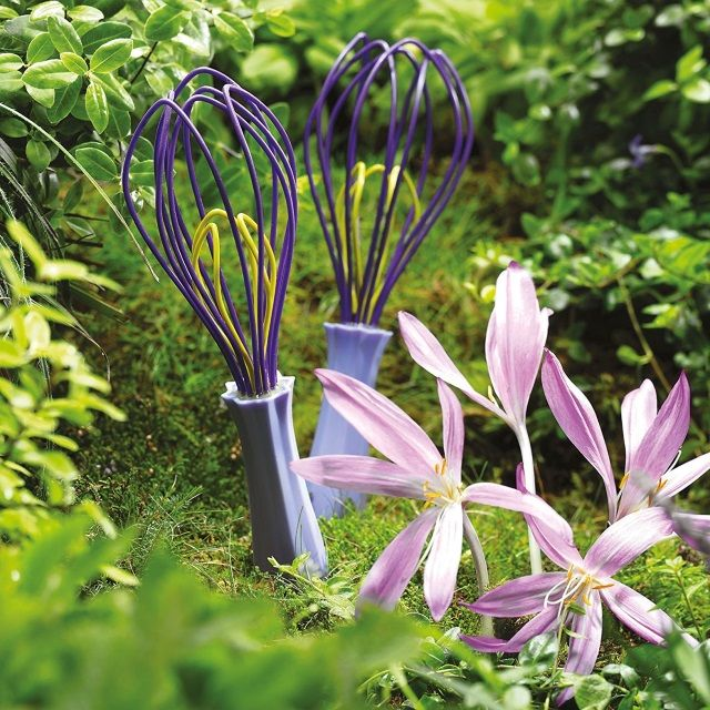 Zeal Reflecting Nature Crocus Flower Whisk