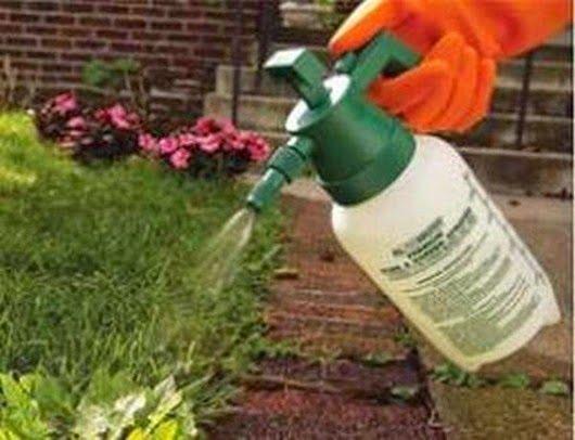 . Убивай сорняки собственным нетоксичным средством, в состав которого входят 4 л уксуса, 250 г столовой соли и 1 ст. л. средства для мытья посуды. Опрыскивай им сорняки в жаркий день.