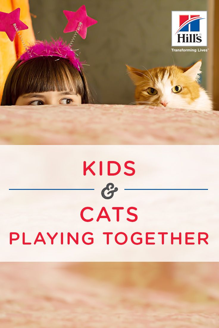 Encouraging Healthy Play Between Cats And Kids Hill S Pet Cat Playing Cats Cat Behavior