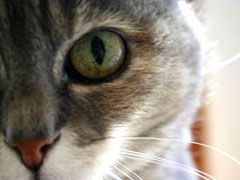 Cat Eye Discharge Causes