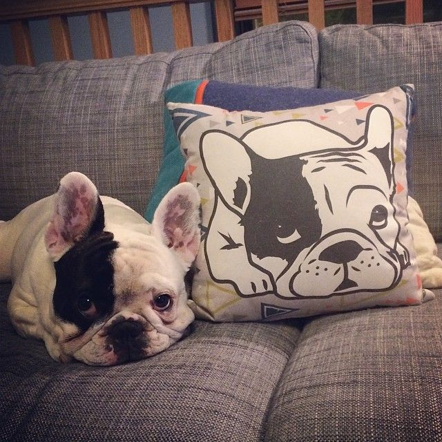 Manny the Frenchie This French bulldog went from unwanted runt of the litter to an internet sensation, model, and philanthropist. He has over 1 million fans across his social media accounts, has been on countless magazine covers, and even has his own product line.