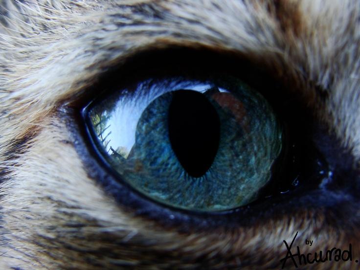 Cats Eye Bd