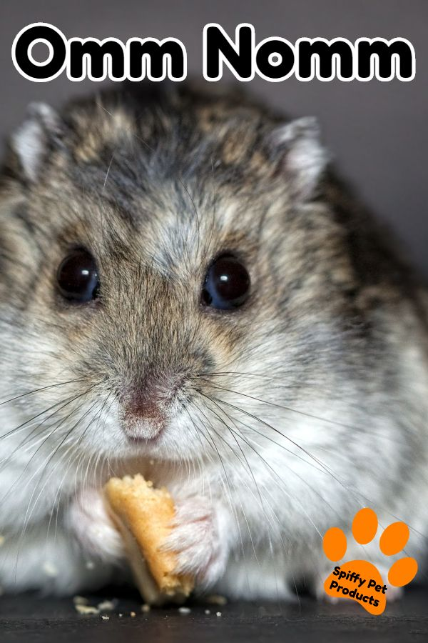 What Do Hamsters Need Here S How To Make Your Own Hamster Starter Kit Pet Hacks Hamster Hamster Care