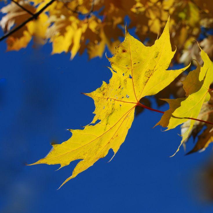 Høsten har så vidunderlig vakre farger
