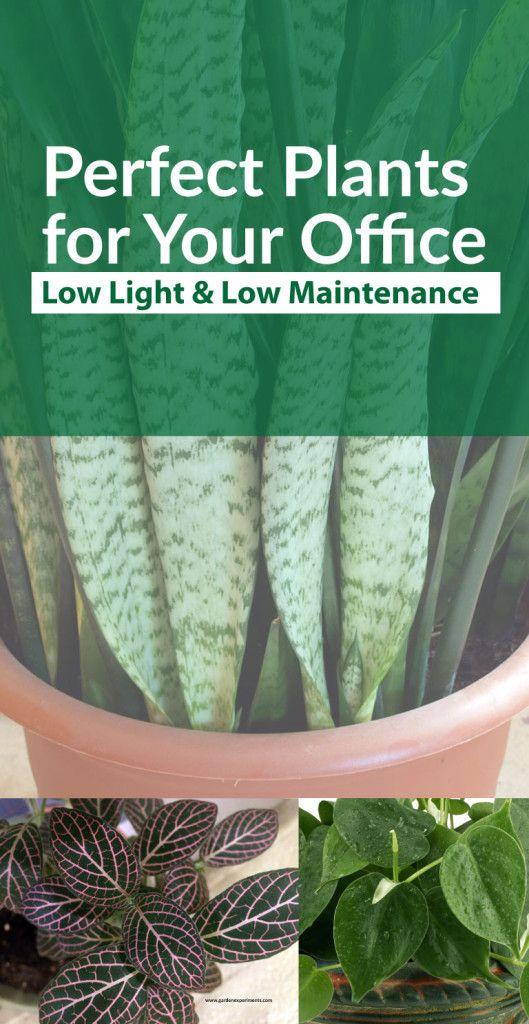 the 25+ best low light plants ideas on pinterest | indoor plants