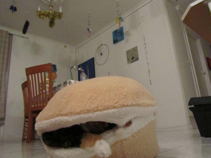 Cat burger 7
