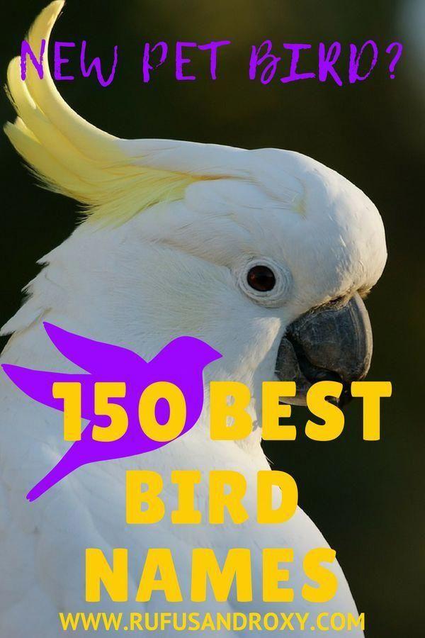 150 Best Bird Names - This MASSIVE list of bird names will help you