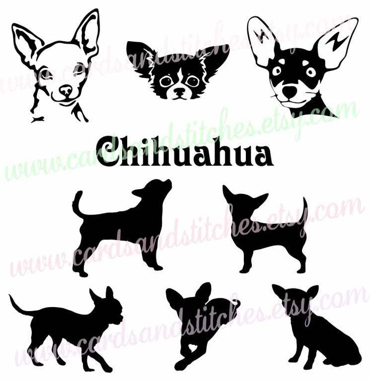 Chihuahua SVG - Dog Silhouettes SVG - Digital Cutting File - Graphic Design - Cricut Cut - Instant Download - Svg, Dxf, Jpg, Eps, Png by cardsandstitches on Etsy