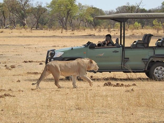 Dream sighting in Hwange #Zimbabwe #safari