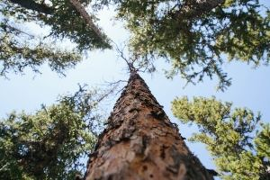 Factors That Need To Be Considered When Determining Tree Removal Cost
