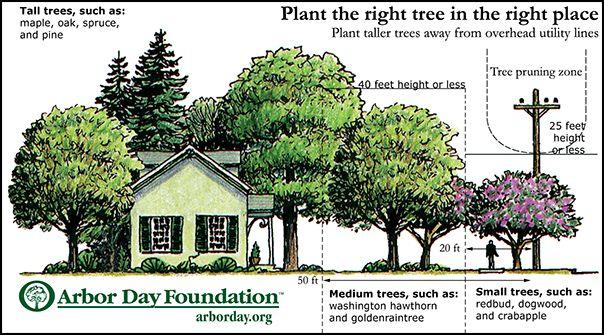 Energy-Saving Trees