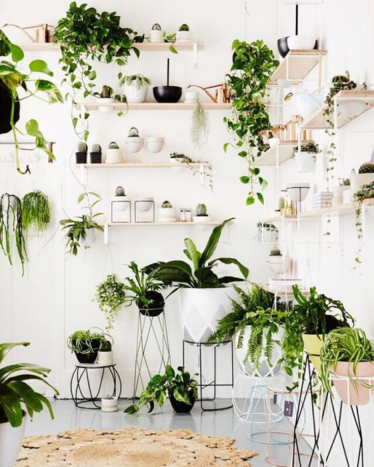 The New IVY MUSE Store In Prahan, Melbourne A True Urban Jungle