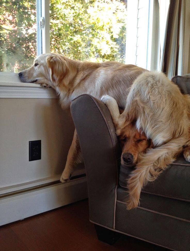 Comfy!