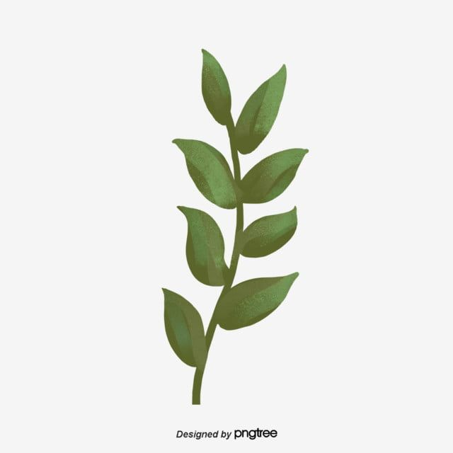 Leaf Branches And Leaves Of Green Plants Plant Clipart Element Blade Of Leaves Png Transparent Clipart Image And Psd File For Free Download Plants Green Plants Leaves Illustration