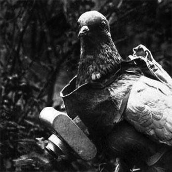 Vintage drone - A German Spy Pigeon (used frequently during WW1).
